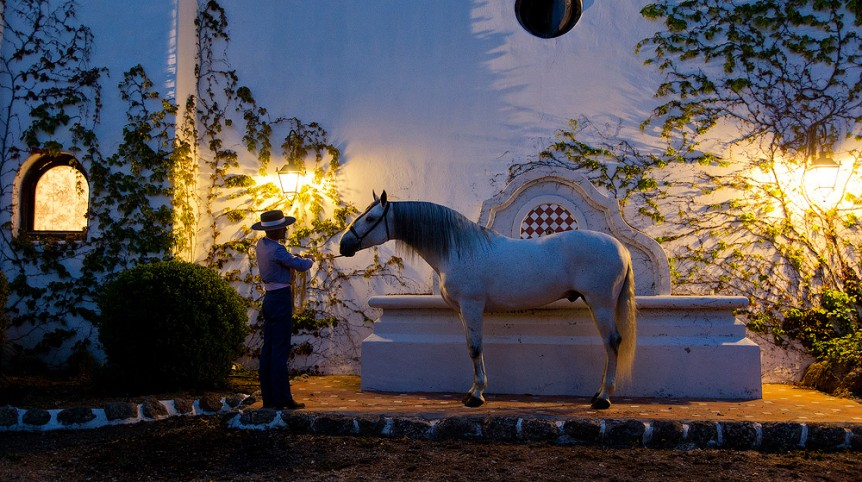 Andalusian stallion in the evening in Spanish patio