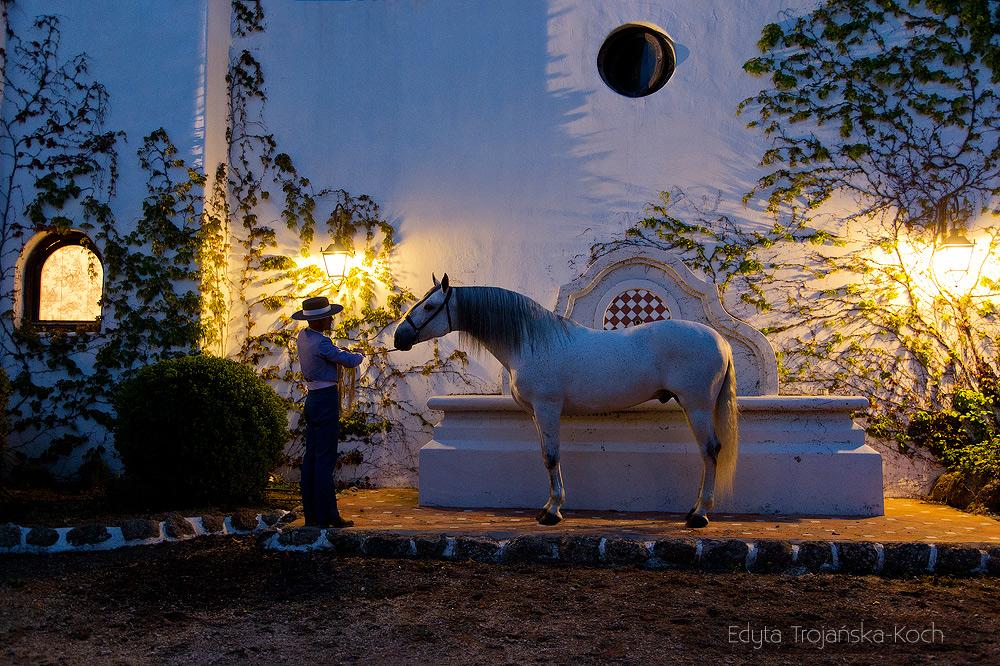 Ogier andaluzyjski wieczorem w hiszpańskim patio