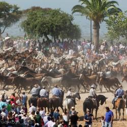 Spęd koni w hiszpańskim El Rocio