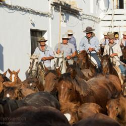 Jeźdźcy w miasteczku podczas spędu koni