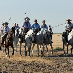 Jeźdźcy podczas spędu koni w Hiszpanii