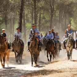 Jeźdźcy w lesie piniowym podczas spędu koni w Hiszpanii