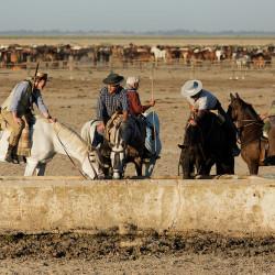 Jeźdźcy pojący konie przed spędem w Hiszpanii