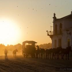 Dyliżan z mułami o zachodzie słońca w El Rocio