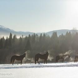 Jeździec z końmi luzem zimą w górach o poranku