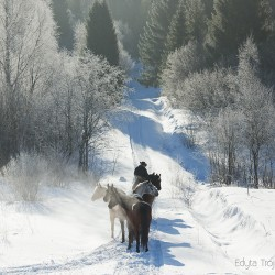 Jeździec z końmi luzem zimą w górach o poranku na drodze