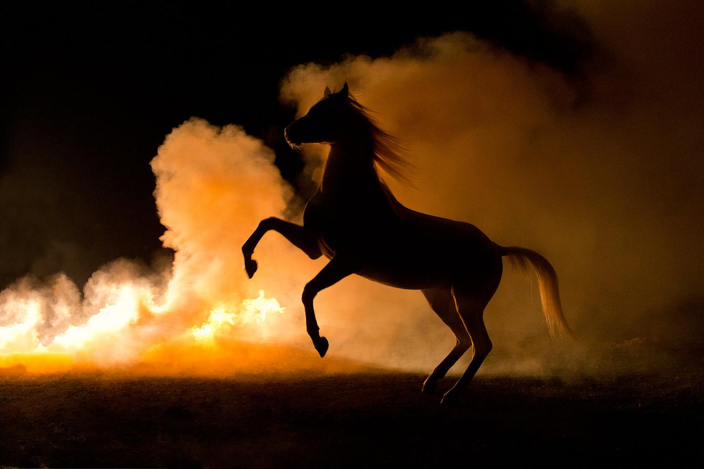 Ogier arabski stający dęba nocą w dymie