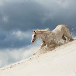 Klacz APH galopująca w dół po piasku