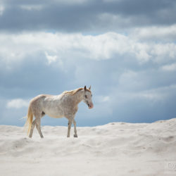 Klacz APH na białym piasku