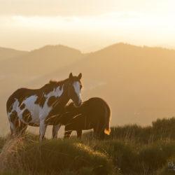 Klacz APH ze źrebakiem w górach o wschodzie słońca