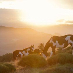 Klacze APH o wschodzie słońca w górach Francji