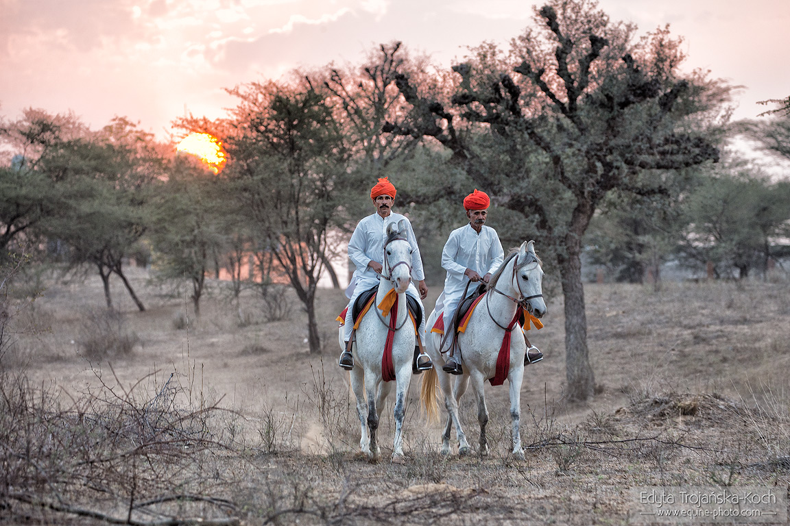 Mandawa Safaris