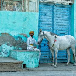 Klacz Marwari z Hindusem w Mandawie na tle bramy