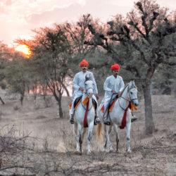 Jeźdźcy na koniach Marwari o zachodzie słońca