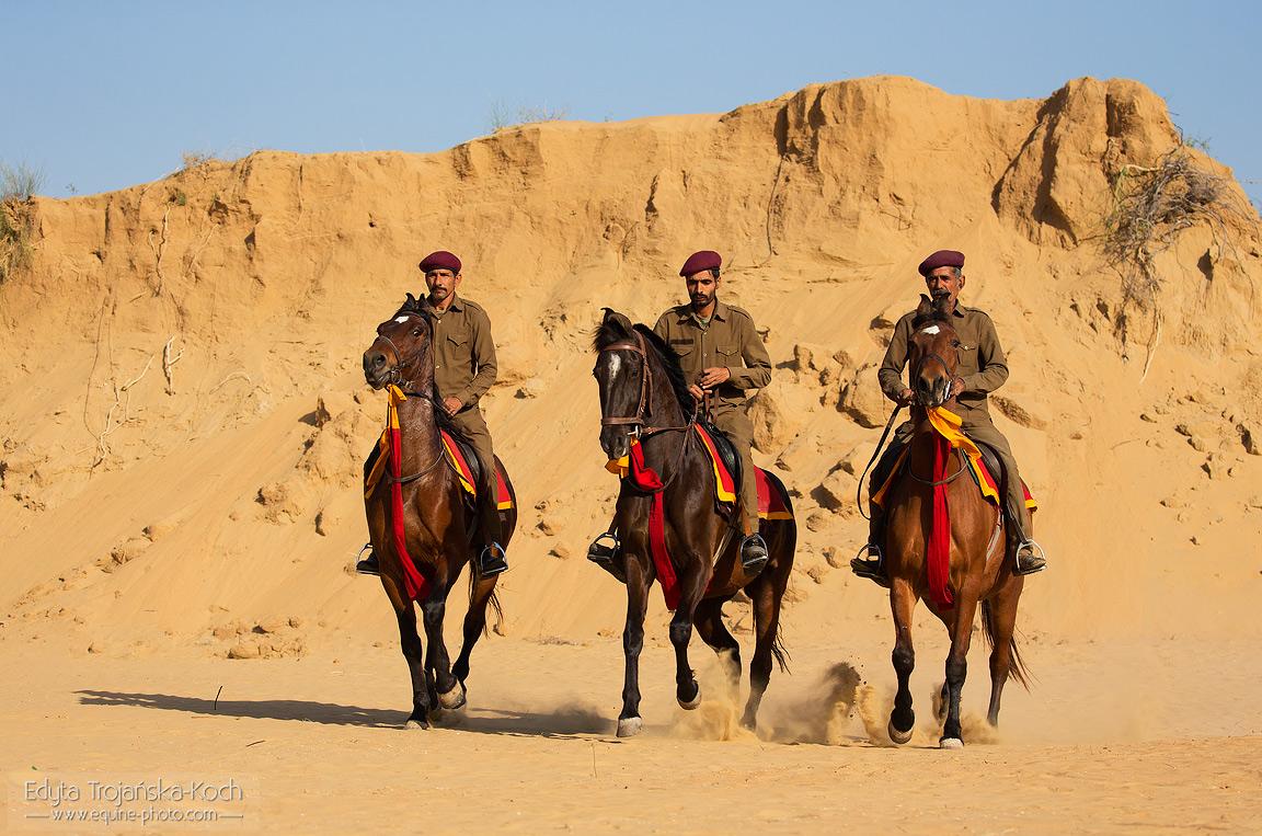 Jeźdźcy na koniach Marwari w Indiach