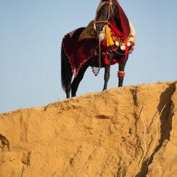 Kara klacz Marwari na piasku na tle nieba