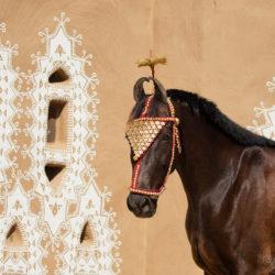 Portret gniadej klaczy Marwari na tle architektury