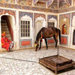 Hindus z klaczą Marwari na dziedzińcu zamku w Mandawie