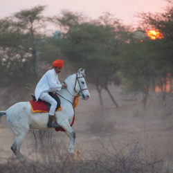Hindus na klaczy Marwari o zachodzie słońca