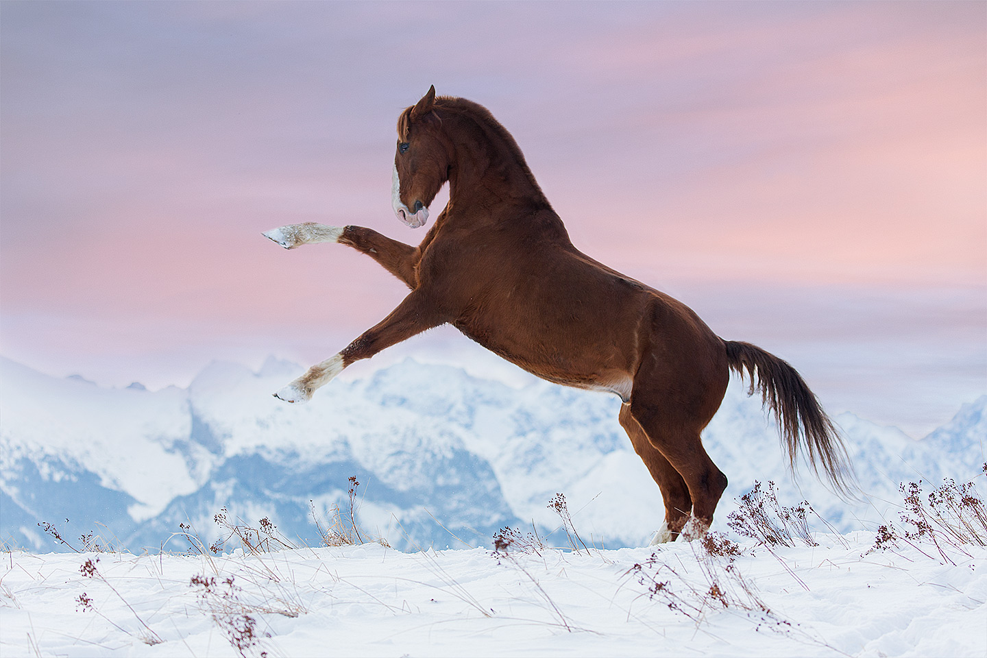 Chesnut KWPN gelding rearing against Tatra mountains at sunrise