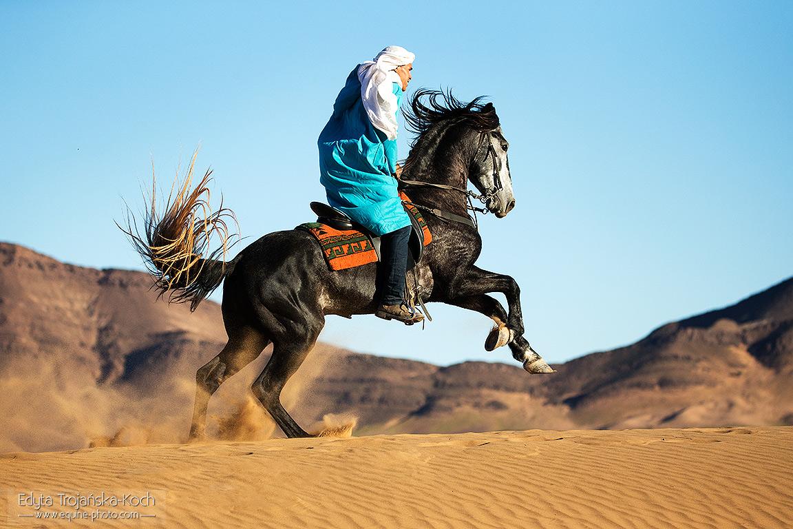 Berber galopujący po wydmach w Maroku