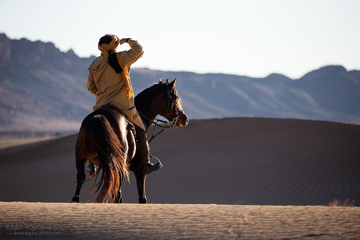 Berber ridding stallion in the desert