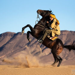 Berber na wspinającym się koniu w Maroku