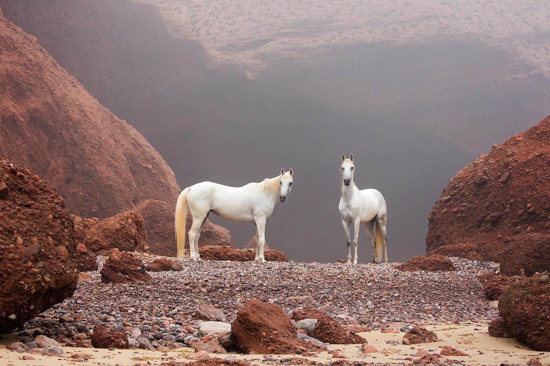 Konie arabskie na plaży