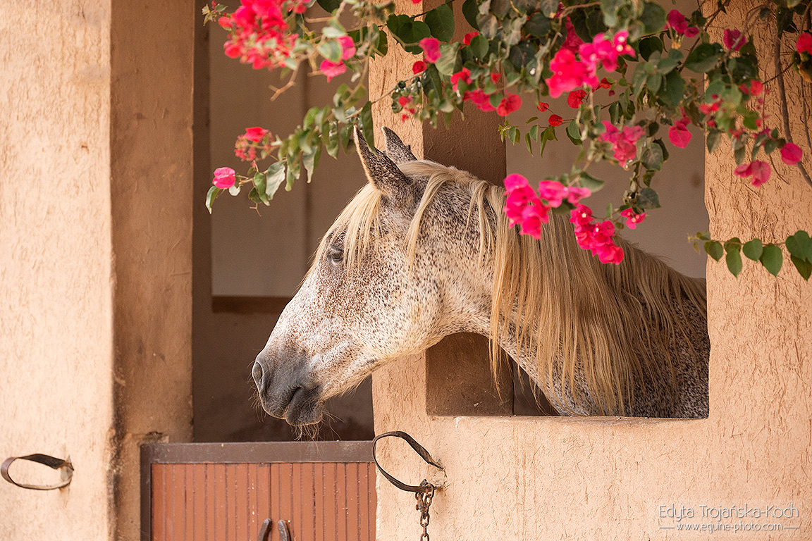Stable in Morocco