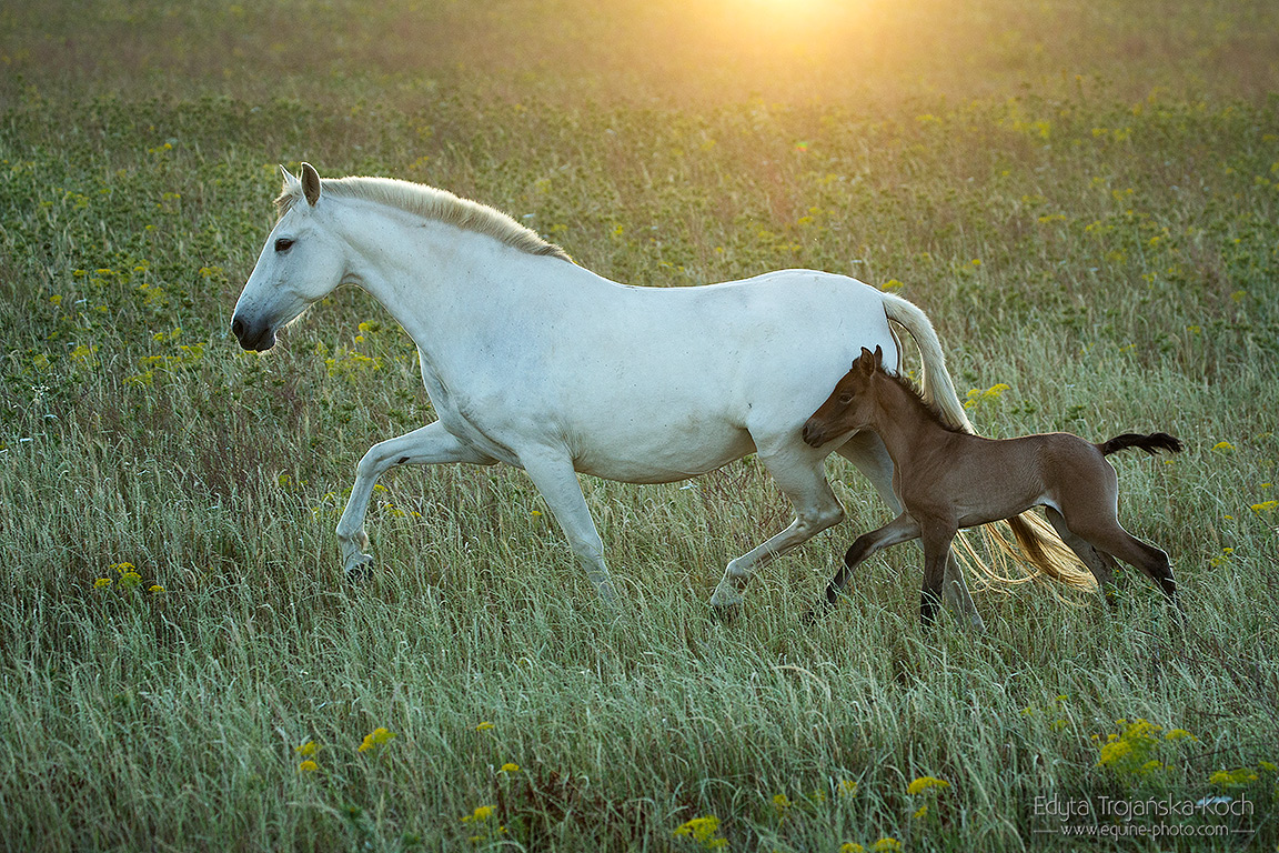 Andalusian mare with foal